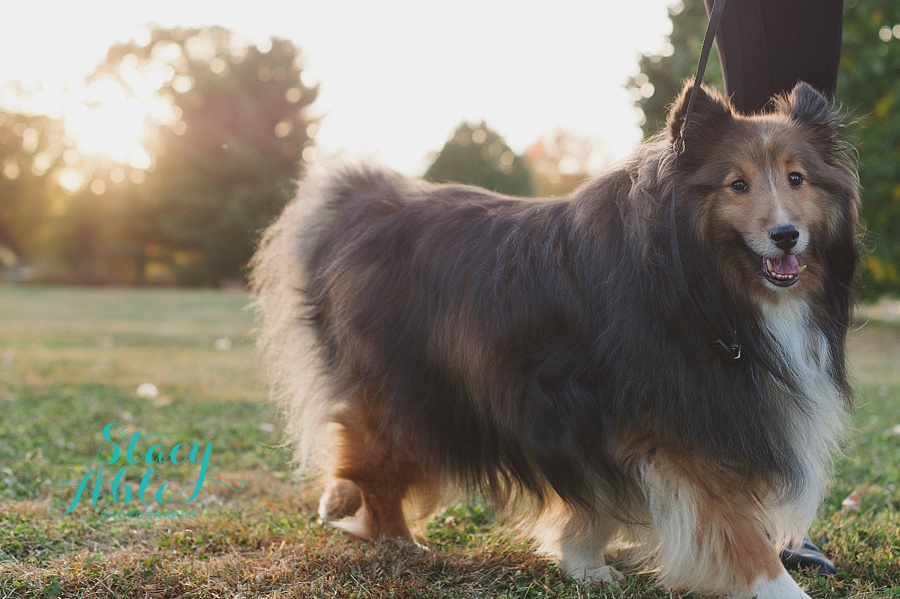 Indianapolis Fall Family Photography With Dogs